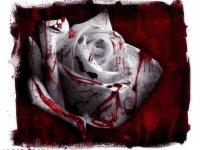 Bloom Bloody, 6 января , Харьков, id20615156